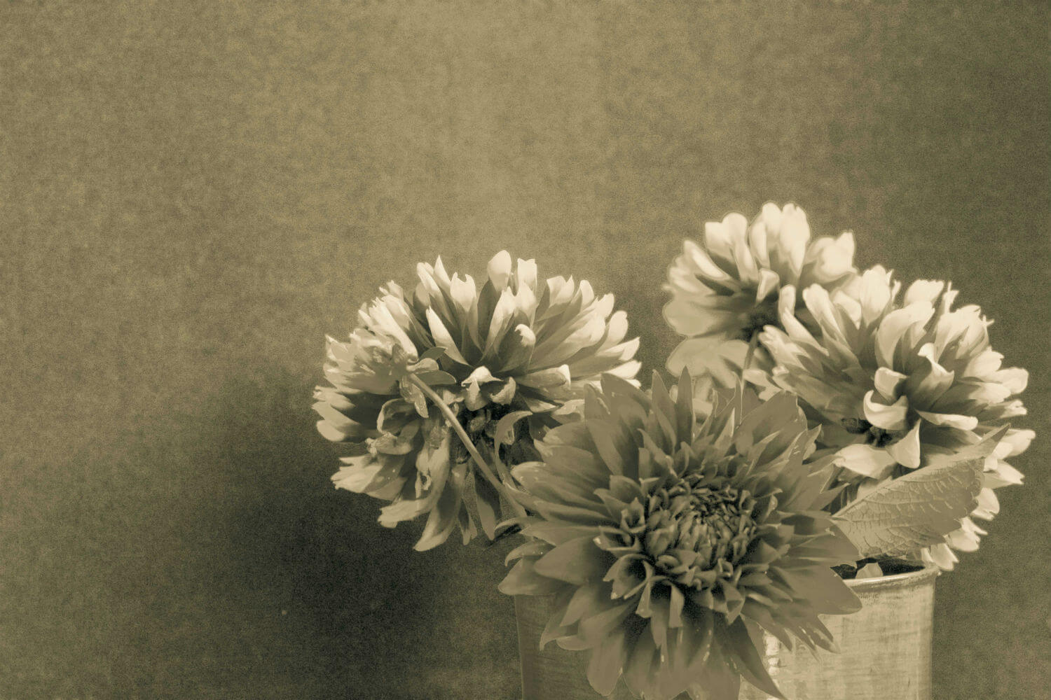 "Floral Study I, 20"" x 24"" sepia flowers in vase liz fiedorek fine art photography ny rhode island"