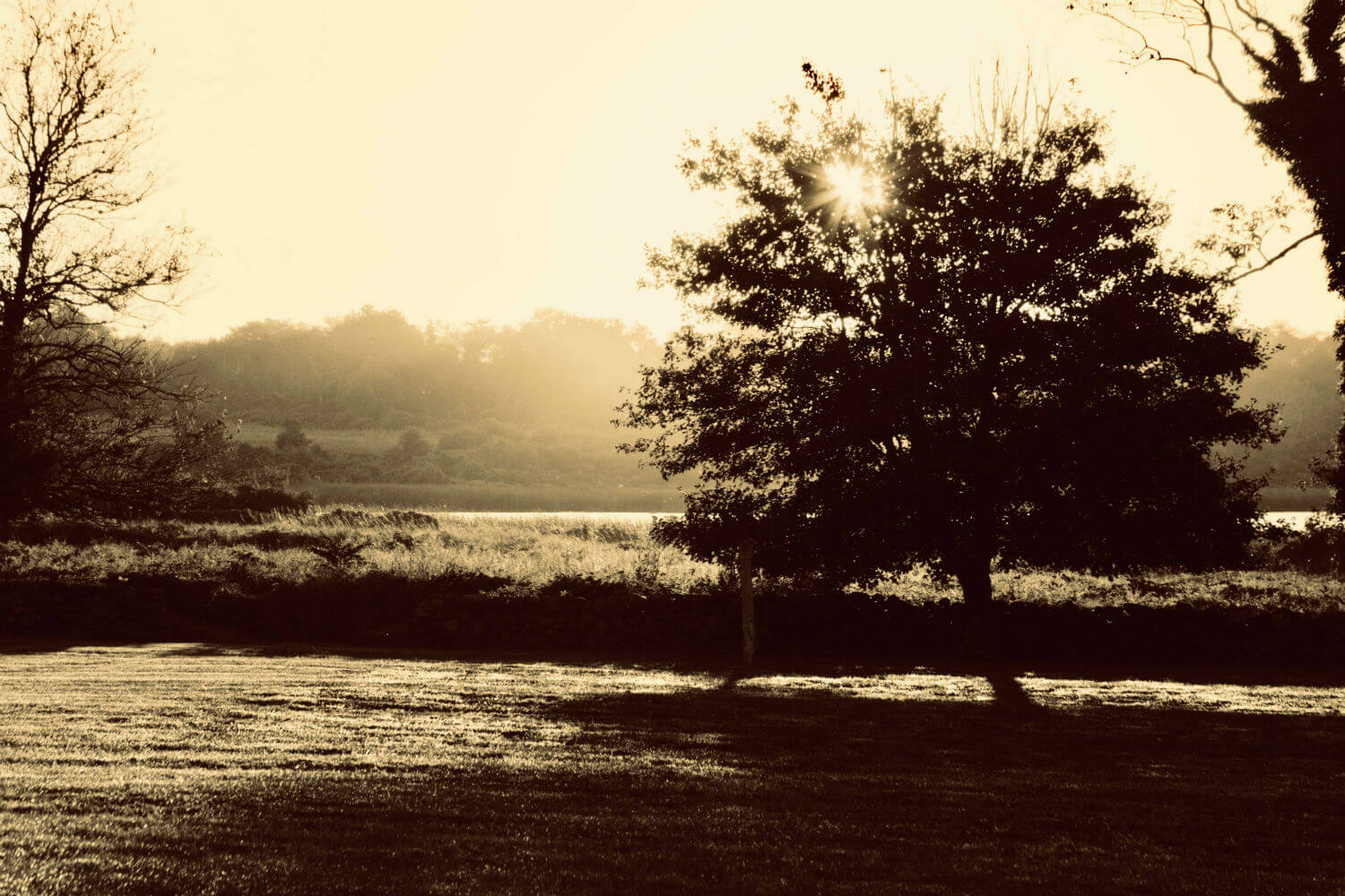 "Morning Light, 19"" x 29"" sepia river and trees liz fiedorek fine art photography ny rhode island"