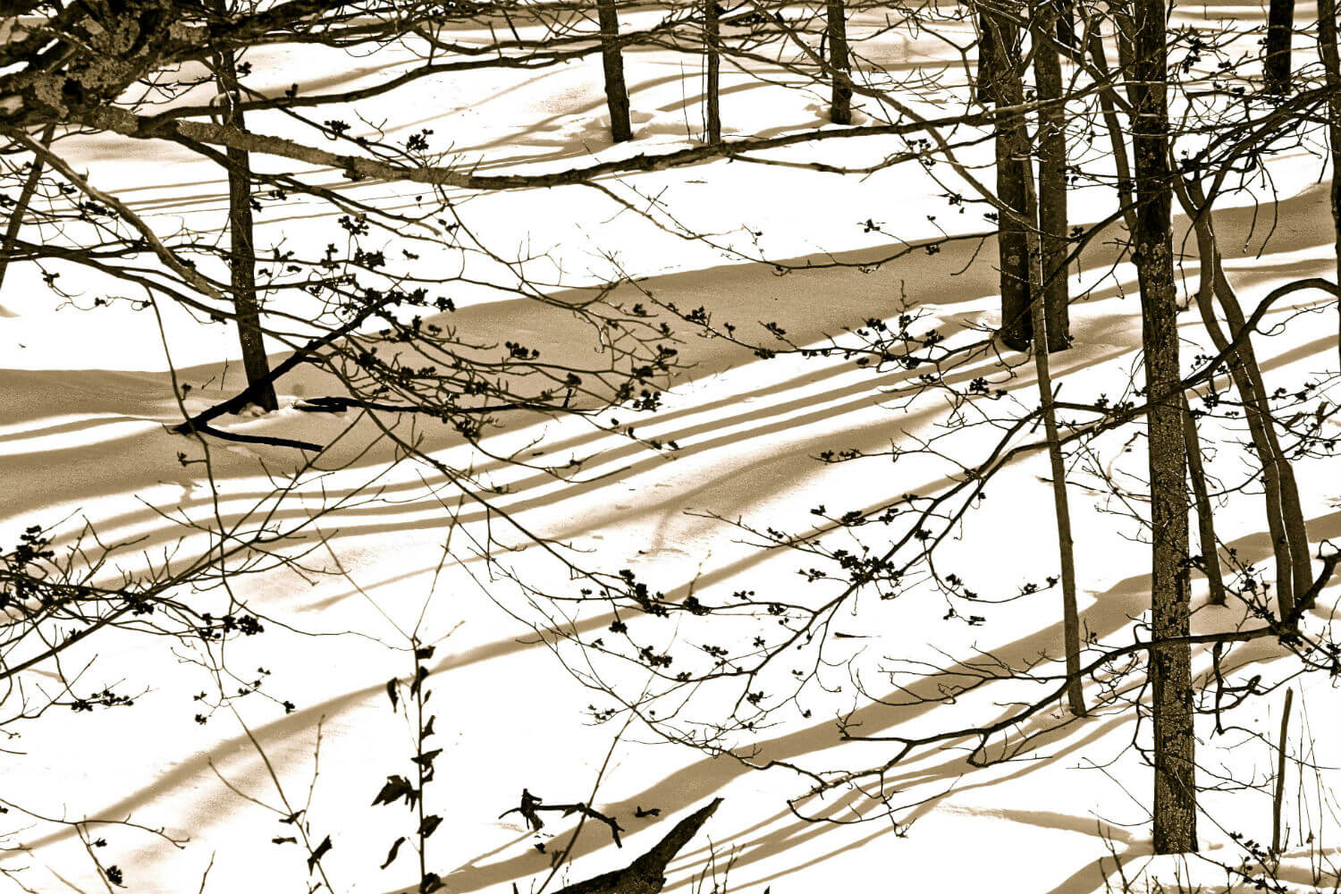 "Winter Afternoon, 18"" x 23"" winter scene in woods liz fiedorek fine art photography ny rhode island"