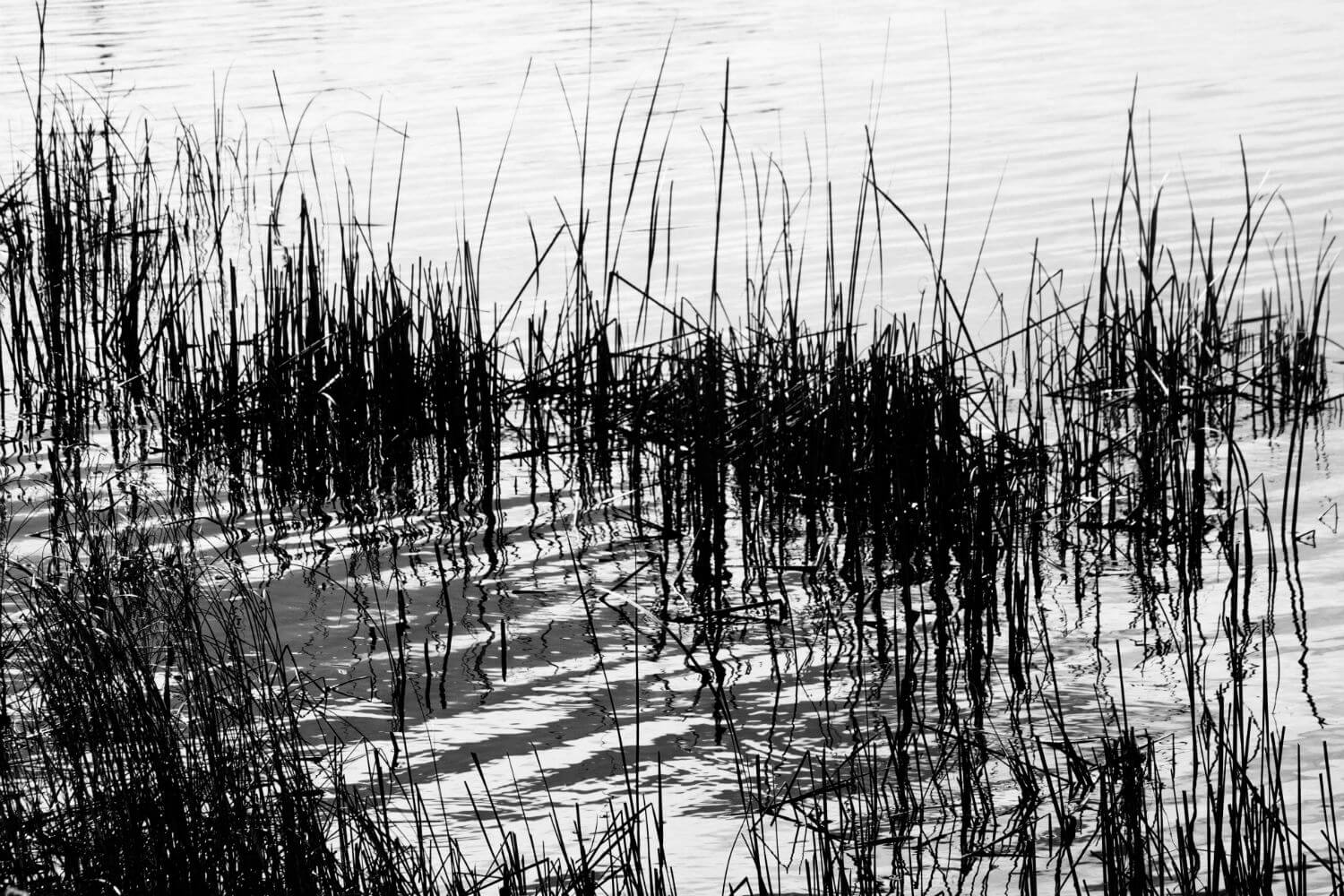 "Round Pond II, 19"" x 40"" sea grass in pond liz fiedorek fine art photography ny rhode island"