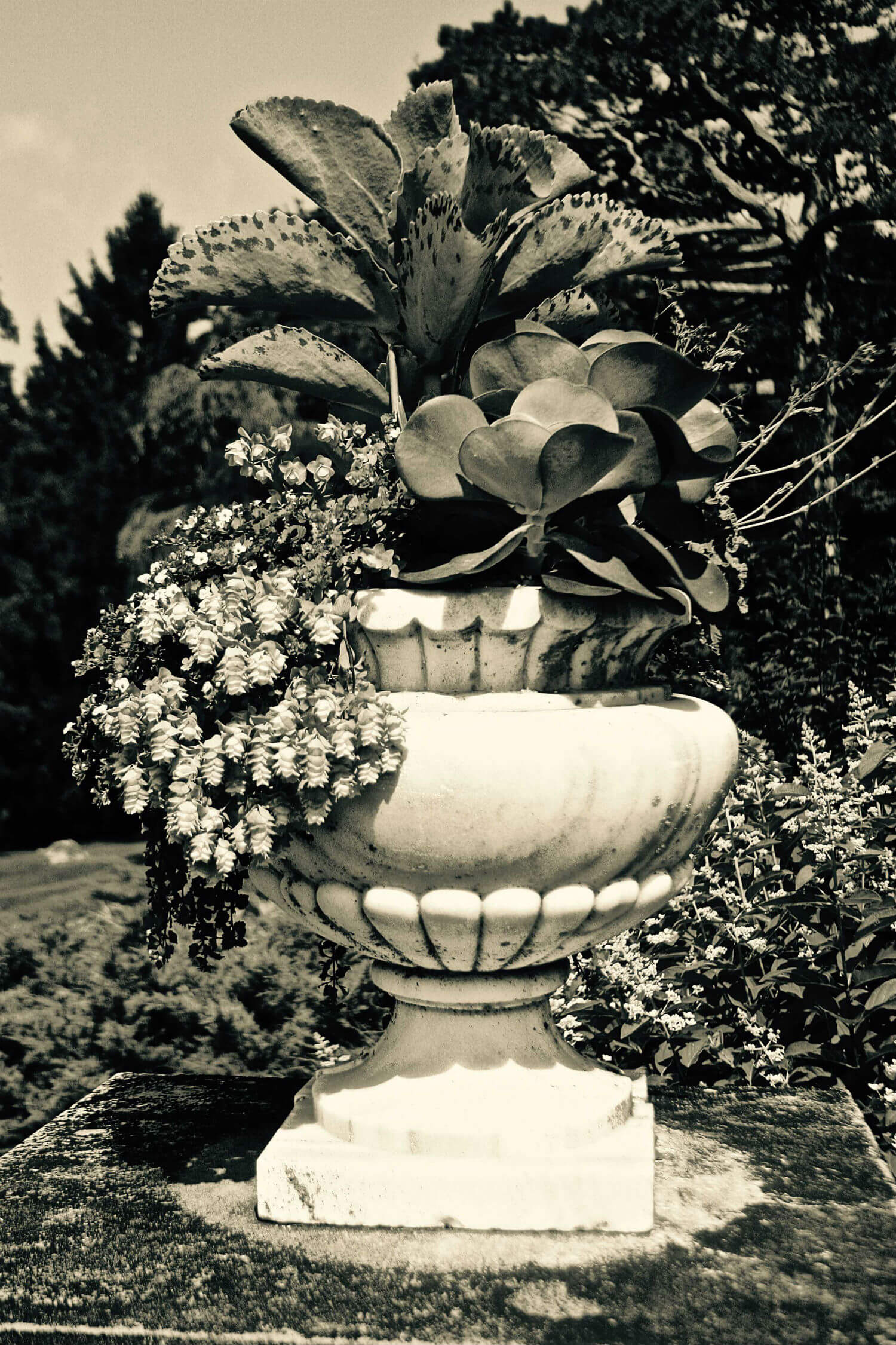 "Wheatleigh I, 26"" x 18"" plants and flowers in large outdoor urn liz fiedorek fine art photography ny rhode island"
