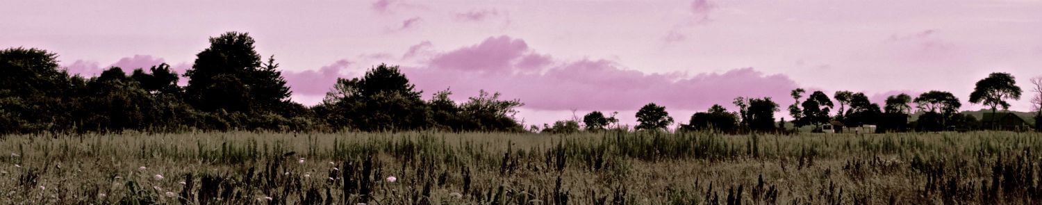"Seapowet Vista I, 12"" x 60"" field and trees liz fiedorek fine art photography ny rhode island"