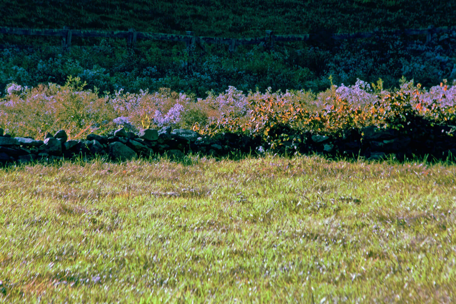 "Katonah I, 20"" x 30"" stone wall field and flowers liz fiedorek fine art photography ny rhode island"