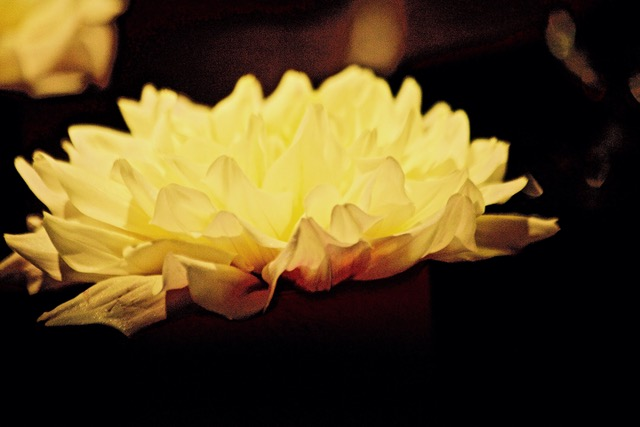 "Untitled II 14"" x 20"" yellow flower petal liz fiedorek fine art photography ny rhode island"
