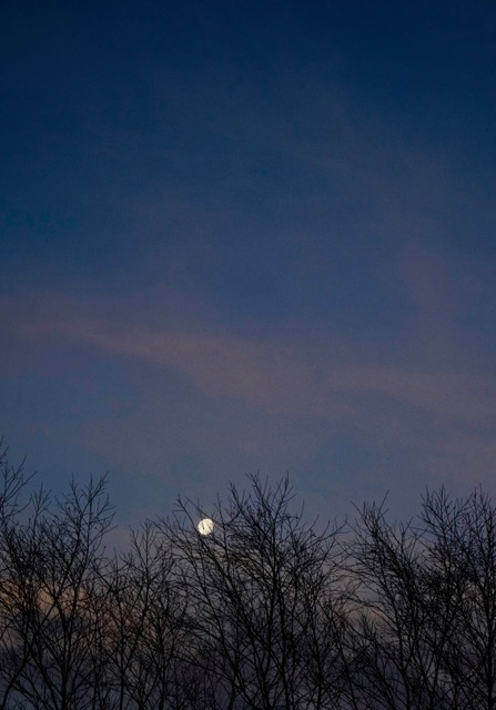 "Moonlight II 30"" x 20"" moonrise over trees liz fiedorek fine art photography ny rhode island"